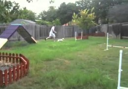 A Homemade Agility Course in Action With Ruby