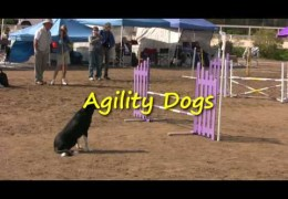 Fun Dog Agility Trial, Check Out the Cocker Spaniel