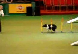 Nice Run By Greg Derrett and GT – Crufts 2008