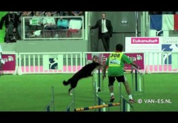 2011 Lievin Agility WC Painful Moments