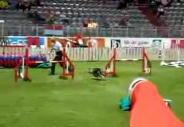 Nice Handling By Denmark Team On This FCI World Championship Course