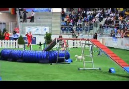 Moving Video of The 2006 FCI Agility World Championship in Basel