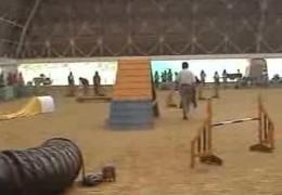 2006 JKC Large Dog Agility Finals