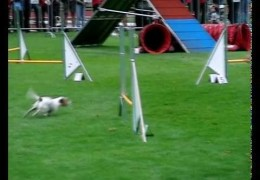 Parson Jack Russell Wins Small Division at the EO 2010