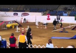 Wow! At The 2011 AKC National Agility Championships