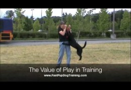 Australian Kelpie Shows the Value of Play in Dog Agility Training