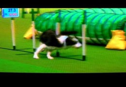 Will Rolfe And His Border Collie Win at 2011 Crufts