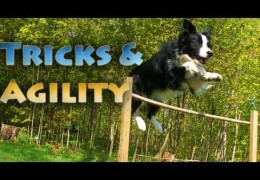Tricks And Agility With Nana The Border Collie