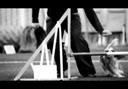 We Run Dog Agility For Many Reasons – Giving Up Is NOT An Option