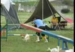 Super Fast Papillon Has A Hiccup in 2007 Competition