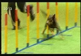 David Munnings and Dobby Take the 2008 Crufts Large Dog Agility Championship
