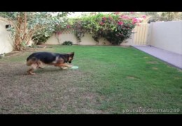 Teaching Your Agility Dog A Send Out And Touch Command
