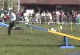 Nice Agility Runs By This Pair Of Border Collies