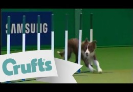 Anthony and Ruby Take The 2009 Crufts YKC Agility Title