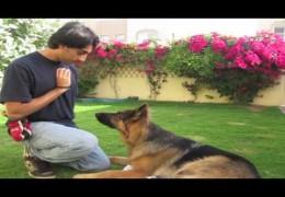 How Teach Your Agility Dog To Stay or Wait