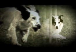So You Think Dog Agility Isn't A Sport?