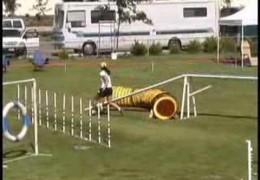 Shasta The Australian Cattle Dog's Winning Run