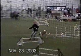 Kenny The Akita Competing In Agility