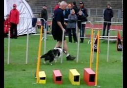 Great 2010 EO Dog Agility Running In The Rain