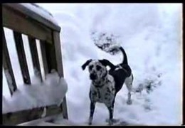Let Bailey Get You Into The Christmas Spirit With Snow Play
