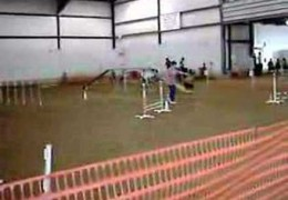 Patterdale Terrier Doing Fine With Agility