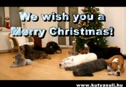 Rocking Around The Christmas Tree Dog Style