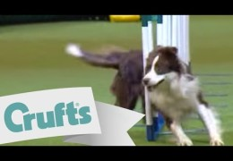 Sweet Run By This Team For The Crufts 2009 Large Agility Win