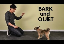 How To Teach Your Dog To Stop Barking At Home