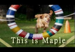 The Power Of The First Agility Dog