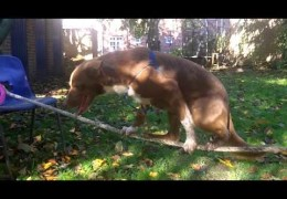 What Could Be Better Than The Sway Bridge in Dog Agility
