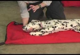 Every Dog Owner Should Know Pet CPR