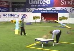 Shar Pei Katie On The Agility Course To Humor Mom