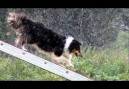 No One Said Dog Agility Was Easy – Nothing Of Value Ever Is