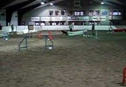Froy The Giant Schnauzer Quits A Great Agility Run One Jump Early