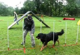 This Hovawart Is Having A Blast On The Agility Course