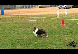 Here Is A Club That Knows How To Put On A Dog Agility Match