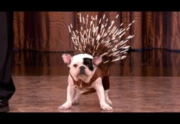 See The New Breeds Introduced By The AKC via Conan