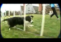 News Coverage For This Amazing Dog Agility Team