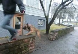 Fun Street Agility Video Produced By K9 Streetstyle