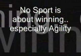 What Is Dog Agility All About?