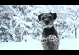 The Amazing Border Terriers Mira and Rut