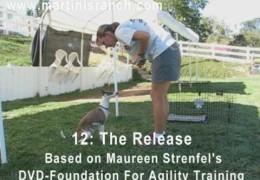 Puppy Agility Foundation Part 2