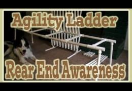 Pamela Johnson's Agility Dog Rear End Awareness Exercises
