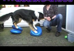 Improve Your Agility Dog's Body Awareness With Balance Discs