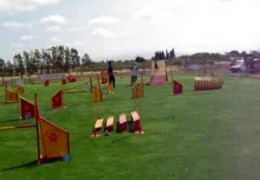 Young Doberman Having Fun In Agility Competition