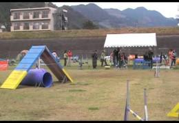 Floppy Eared Doberman Loving Dog Agility in Harazuru
