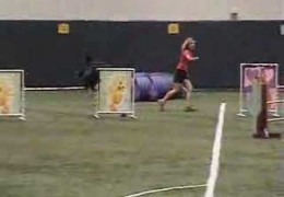 This Beauceron Loves Competing in Agility