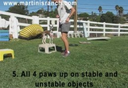 Starting A Puppy In Agility This Is A Must See Video Pt 1