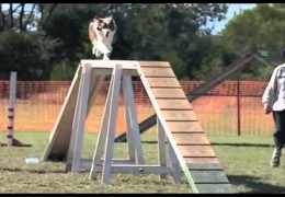 2011 Awesome Dogs And Fabulous Spills In Slow Motion