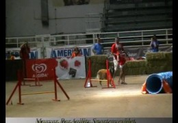 Patricia Ale and Gini Competeing in Paragility